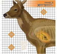 Champion Target Deer X-Ray (6)